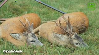 Охота на косулю с тепловизионными приборами Pulsar Trail и Helion
