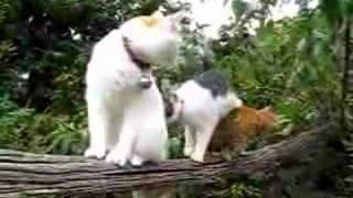 かご猫46