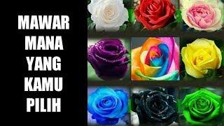 Jenis Mawar apakah yang kamu pilih? Lihat analisanya