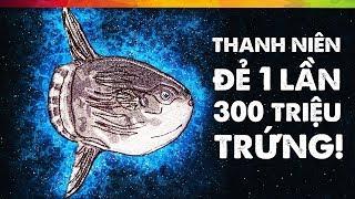 #118 Loài Cá Đẻ 1 Lần Tương Đương Dân Số Việt Nam + Nhật Bản + Thổ Nhĩ Kỳ! 😱😱😱