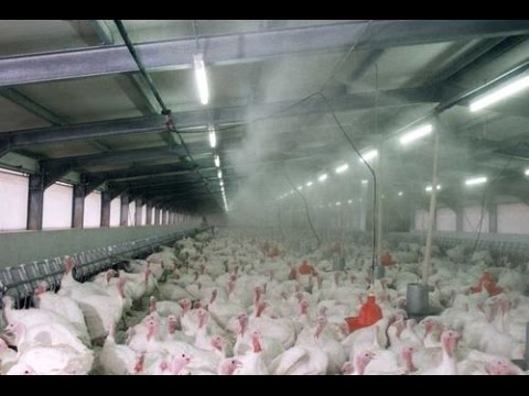 video High Pressure Poultry Pen Fogger (Sprinkler System)