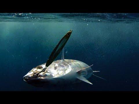Angler Chronicles | Ocean Odyssey