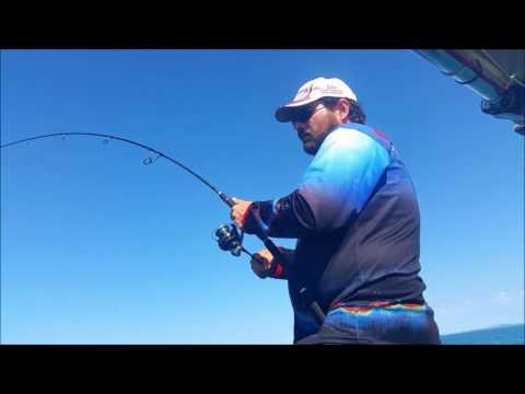 Jigging Longtail tuna