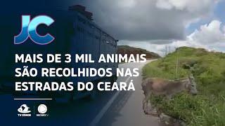 Mais de 3 mil animais são recolhidos nas estradas do Ceará
