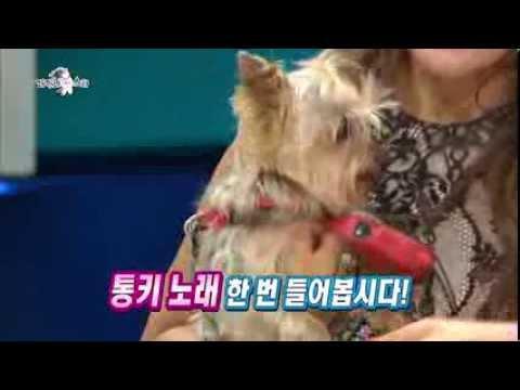 [HOT] 라디오스타 - 프리마돈나 조수미의 노래하는 반려견, 강타네 개인기는? 20130911
