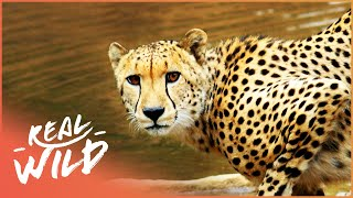 The Waterhole [Survival One Hour Documentary] | Wild Things