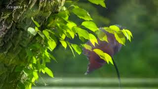 Morning Relaxing Music   Soothing Piano Music For Stress Relief, Yoga Music, Study Music Natalie
