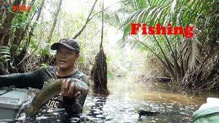 Lội Trong Rừng Tràm-Bắt Toàn Cá Ngon