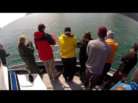 Orca Whale Kenai Fjords