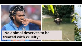 Virat Kohli, Rohit Sharma react to pregnant elephant's dea..