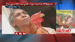 Beloved Pet Chicken behaves like a Dog..