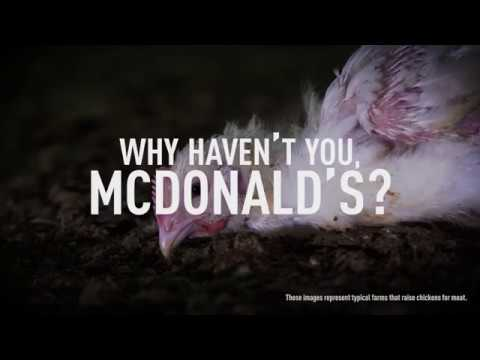 DISTURBING: Chickens Suffer for McDonald's Menu
