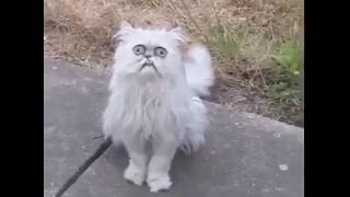 Michael Rapaport - This Stray Cat Looks Like Grandma