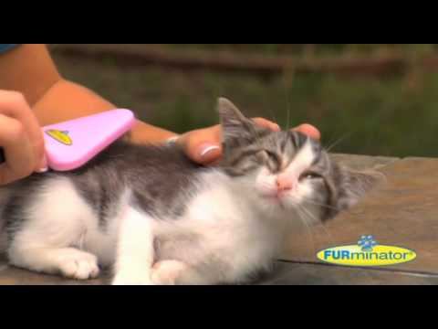 Furminator My FURst Kitten Groomer