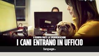 Cani in ufficio durante l'orario di lavoro: