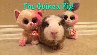 Beanie Boo's: The Guinea Pig!