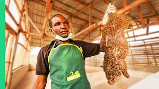 Nigeria's Bushmeat Farms!! Eating Giant Rat with Miss Nigeria!!