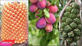 Đây chính là những loại quả hiếm nhất trên Trái Đất đến 99% người trên thế giới không biết tên