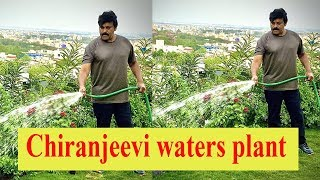 Chiranjeevi enjoys his early morning duties during coronav..