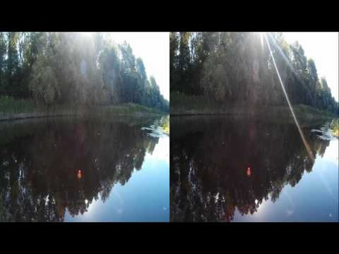 Morning RIVER ! Natural sounds of Nature! 3D VIDEO