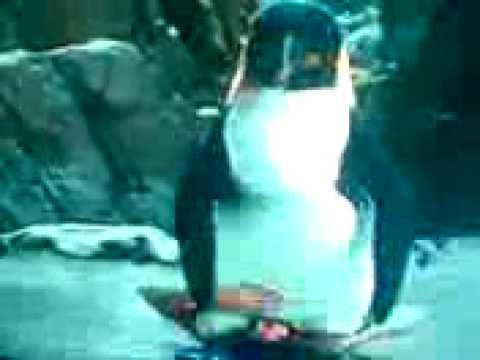 wiki meet the spartans penguin