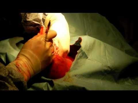 Aldie Vet Cesarean