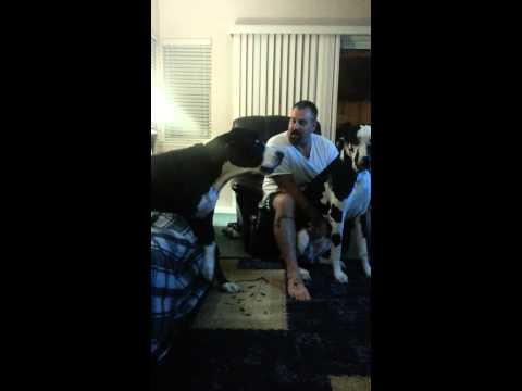 Љубоморното куче се лути кога сопственикот го гали неговиот брат