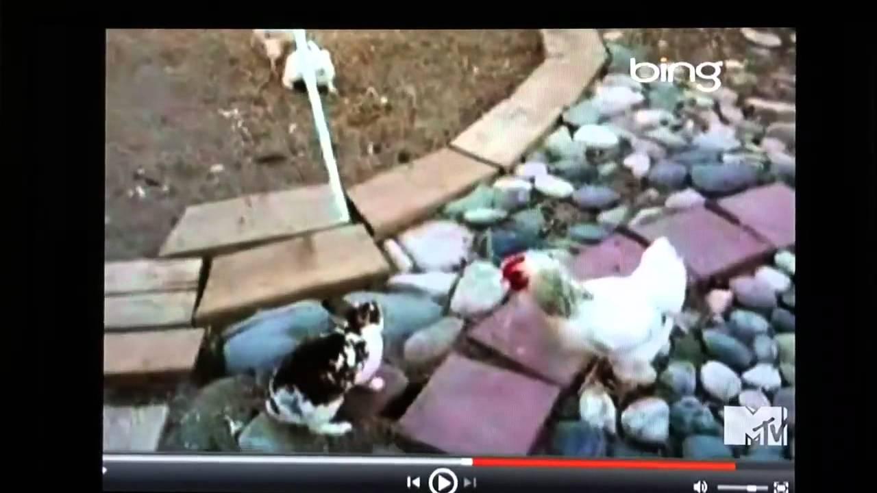 Funny Chicken Police: ROB DYRDEK CHICKEN POLICE