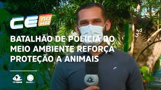 Batalhão de polícia do meio ambiente reforça proteção a animais silvestres