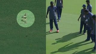 Watch: Snake enters ground during live match, BCCI shares ..