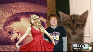 Taylor Swift Vs. Ed Sheeran: Cutest Kitten Showdown!