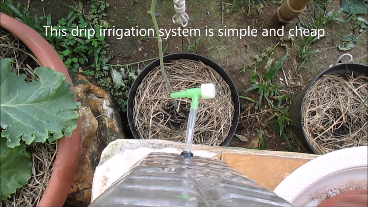 Creating A Simple Drip Irrigation System from Plastic Bottle