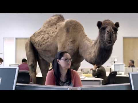 GEICO Camel Commercial - Hump Day Commercial - Camel Hump Day T-Shirt