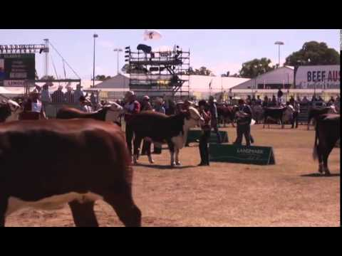 Business opportunities at Beef Australia 2015