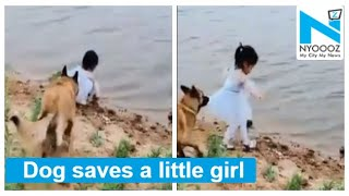 Viral Video: Dog saves a little girl from falling into wat..