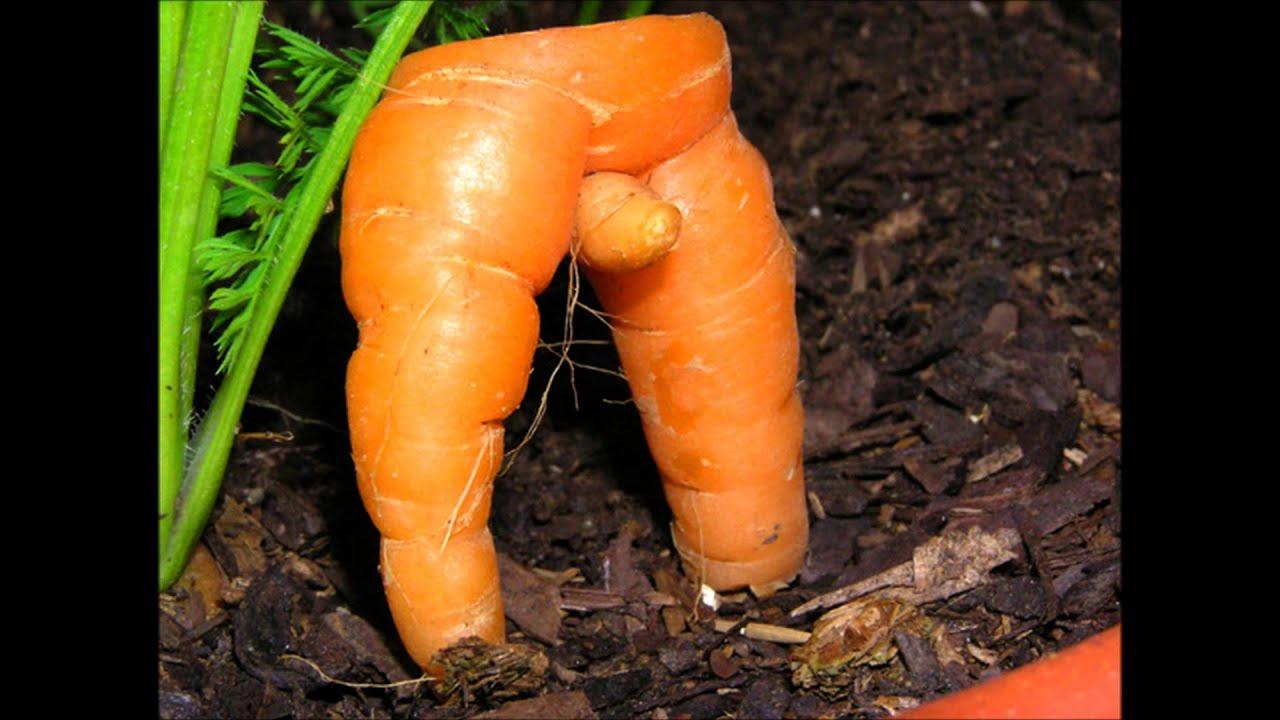 сексуального овощи похож на пенис сейчас дошла этого
