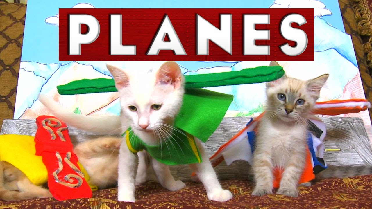 Planes de Disney raconté par des chatons