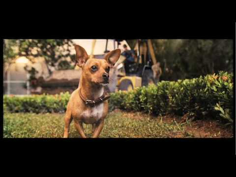Beverly Hills Chihuahua'