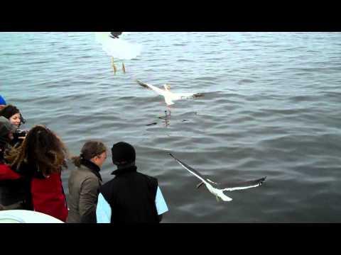 Seal & Dolphin Cruise