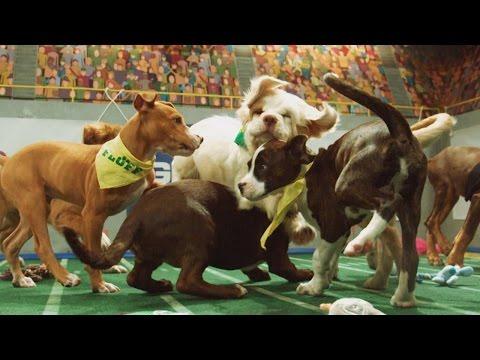 Power Puppies | Puppy Bowl