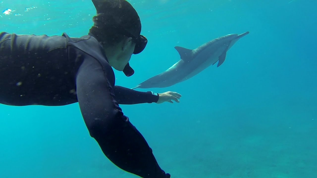 Nager avec les dauphins