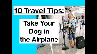 How to Fly With Your Dog in the Airplane (10 Travel Tips)