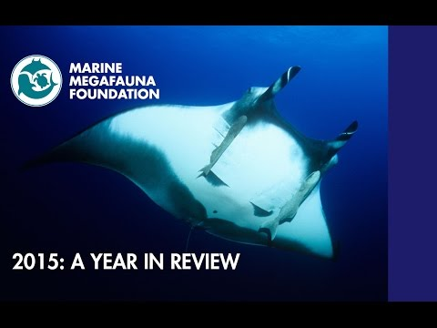 Marine Megafauna Foundation 2015: A Year in Review