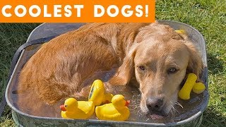 Dog Days of Summer Coolest Dogs of 2018 | Funny Pet Videos - YouTube