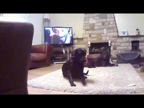HomeMonitor HD Demo Footage - WiFi Security Camera