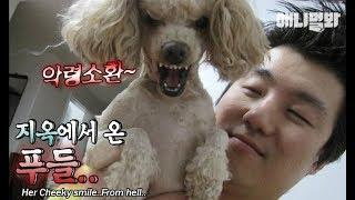 (누가 자꾸 소환주문 외우냐..)ㅣA Poodle Dog From HELL?!