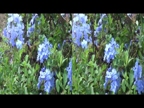 3D Video extreme!!! (evo 3D Works) 3D Flowers