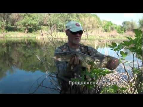 Рыбалка. Ловля щуки на блесну
