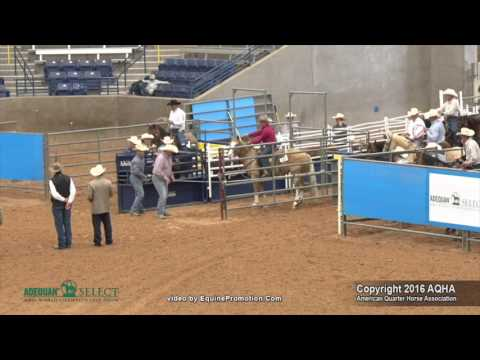 A Judges Perspective: 2016 Select Roping Events