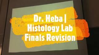 Histology Lab | Final Exam Revision | Dr. Heba